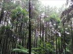 hutan_20170807_204520.jpg