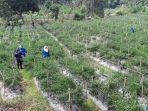 ilustrasi-lahan-pertanian-di-kabupaten-bogor.jpg