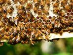kandang-lebah_20170615_130300.jpg