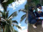 kelapa-pohon.jpg