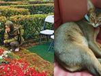 kucing-peliharaan-asharaf-mati.jpg