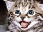 kucing_20151106_230507.jpg