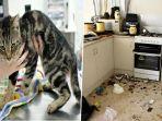 kucing_20161124_133821.jpg