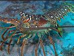 lobster_20170801_195719.jpg