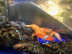 lobster_20180607_181138.jpg