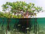 mangrove_20180719_203227.jpg