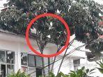monyet-di-atas-pohon.jpg