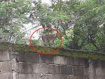 monyet-turun-gunung.jpg