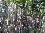 motor-di-pohon-bambu.jpg