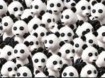 panda-1_20160129_102312.jpg