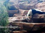panda_20171126_161130.jpg
