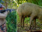 pemburu-babi-hutan_20180604_204318.jpg
