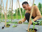 petani-milenial-di-kota-bogor-mencoba-menanam-bonteng-acar.jpg