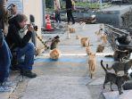 pulau-yang-dihuni-banyak-kucing_20180608_210156.jpg