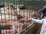seorang-anak-sedang-memberikan-makan-dilokasi-penangkaran-rusa.jpg
