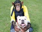 simpanse_20151118_200701.jpg