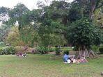 suasana-di-dalam-kebun-raya-bogor-jumat-1772020.jpg