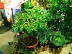 tanaman-hidroponik-2_20151003_213626.jpg
