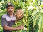 tanaman-porang-dibudidayakan-mujiono-56-petani-dari-madiun-hingga-bisa-jadi-miliarder.jpg