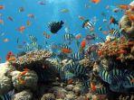 terumbu-karang-baru.jpg