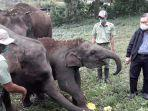 tsi-taman-safari-puncak-bogor-pamerkan-koleksi-satwa-gajah.jpg