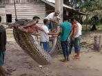 ular-piton_20171002_144358.jpg