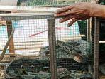 ular-piton_20181004_145546.jpg