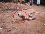 ular_20170530_082524.jpg