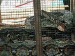 ular_20181004_142436.jpg