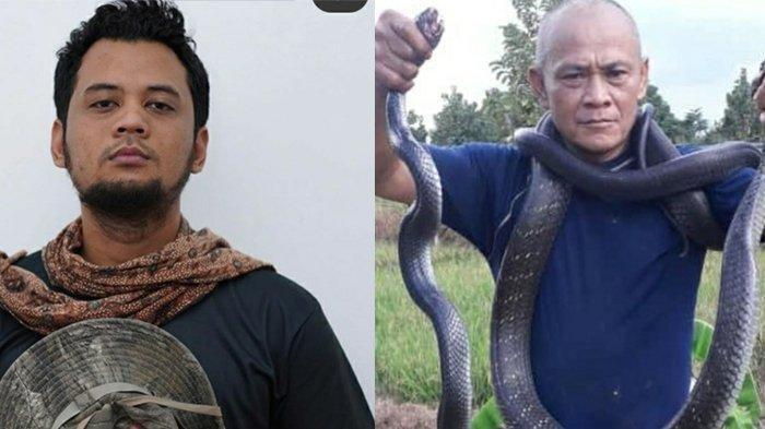 Abah Alex Tangkap Ular King Kobra yang Sedang Makan Ular Kobra, Cerita Begini ke Panji Petualang