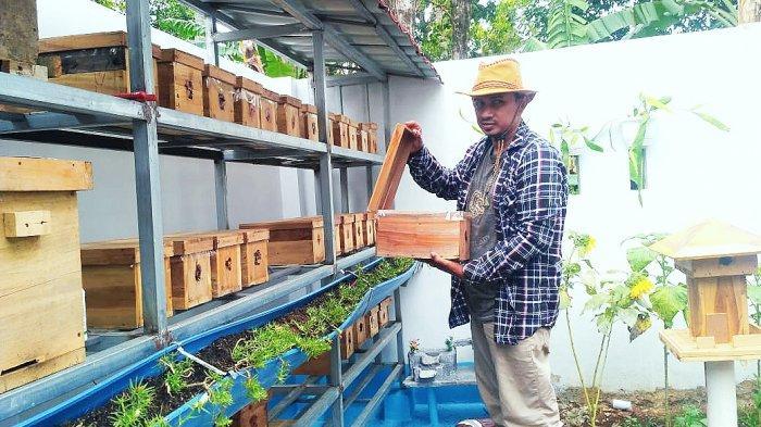 Pembudidaya Lebah Tanpa Sengat di Kuningan Berhasil Produksi Madu Murni, Ini Kisah Suksesnya
