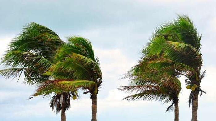Angin Puting Beliung Mengamuk di Indramayu, 45 Rumah Rusak dan Ratusan Pohon Tumbang Disapu Angin