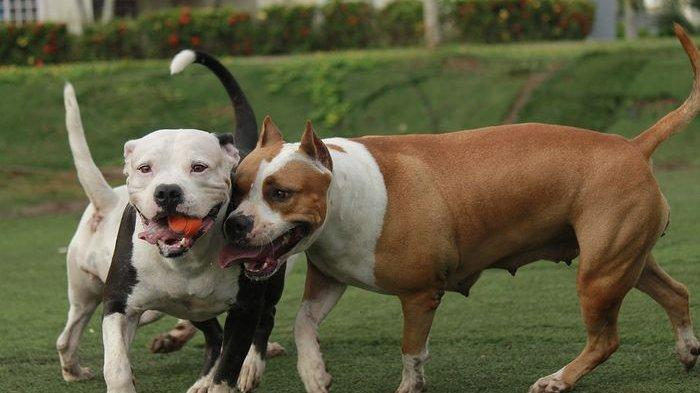 Suami Istri Adopsi Anjing, di Rumah Malah Tergoda Menyantapnya, Daging Dimakan, Tulangnya Digerogoti