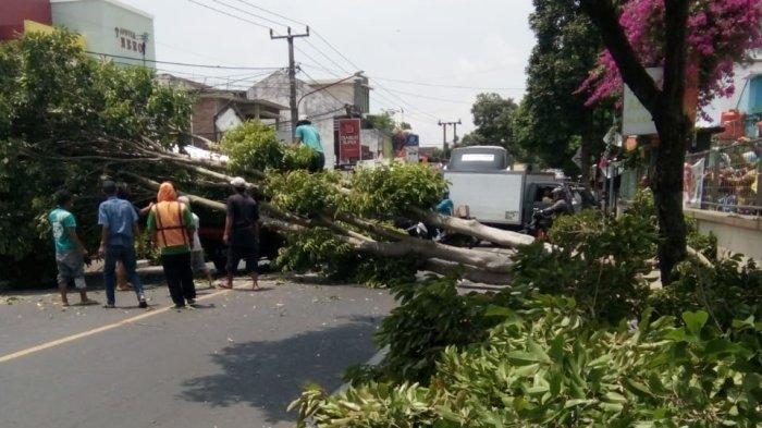 Ada Pohon Tumbang, Arus Lalu Lintas Arah Kuningan - Cirebon Alami Kemacetan
