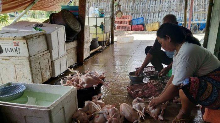 Jelang Pencoblosan, Penjualan Ayam di Indramayu Mendadak Laris, Pembeli Ngaku untuk Bakar-bakaran
