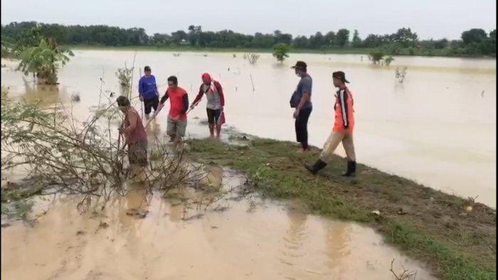 300 Hektare Sawah di Jatitujuh Majalengka Terendam Banjir, Buntut Luapan Air dari Sungai Cibuaya