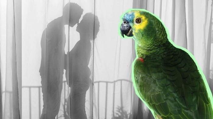 Gara-gara Kicauan Burung Beo, Perselingkuhan Suami dan Pembantu Terbongkar, Istri Syok