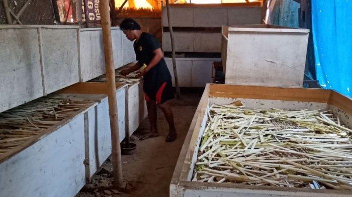 Desa Kertasemaya Menjadi 'Kampung Jangkrik' di Indramayu, Sebulan Bisa Panen 640 Kg Jangkrik