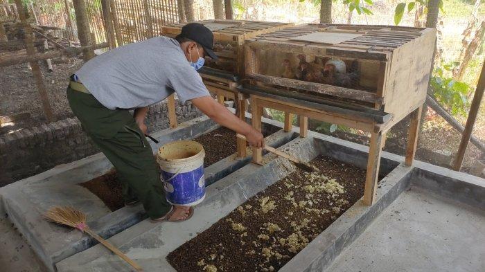 Budidayakan Ulat Maggot, Prajurit TNI di Majalengka Bantu Atasi Persoalan Sampah Rumah Tangga