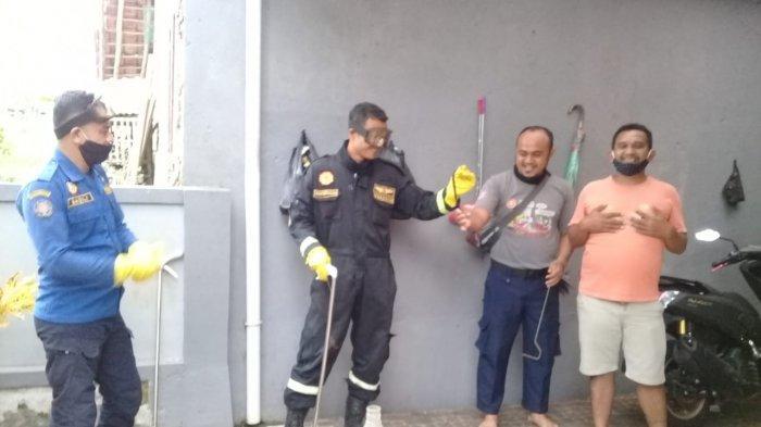 Sepasang Ular Kobra Jawa Tiba-tiba Masuk Rumah Warga Sukamulya Kuningan, Damkar Turun Tangan