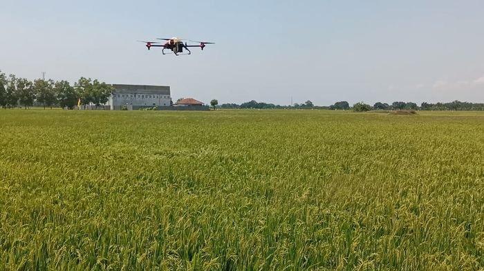 Canggih, Indramayu Uji Coba Pemupukan Padi Pakai Drone Otomatis, Cukup 20 Menit per 1 Hektare Sawah