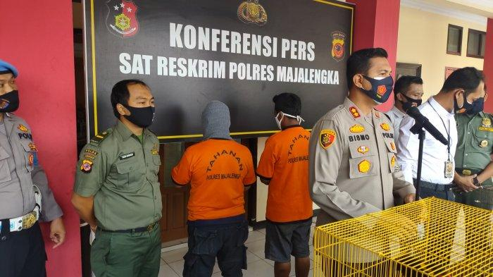 Polisi Majalengka Tangkap Pelaku Jual Beli Satwa yang Dilindungi, Berawal dari Laporan Masyarakat