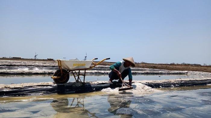 Miris, Panen Garam Melimpah Tapi Harga Anjlok,Hingga Upah Buruh Garap Lebih Kecil dari Buruh Panggul