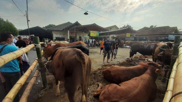 Jumlah Hewan Kurban di Desa Bode Lor Diklaim Terbanyak se-Kabupaten Cirebon