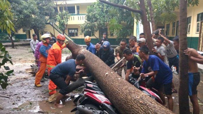 Hujan Angin Mengamuk di Cimahi dan KBB, Pohon Tumbang Timpa Motor, 7 Rumah Warga Cililin Rusak
