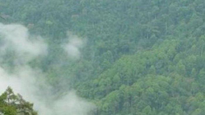 Ini Pengakuan TKI yang Selamat Setelah Menembus Hutan Perbatasan Malaysia, 3 Rekan Masih Hilang
