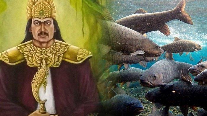 Misteri Ikan Dewa di Kolam Cibulan Kuningan, Dipercaya Sebagai Jelmaan Prajurit Prabu Siliwangi