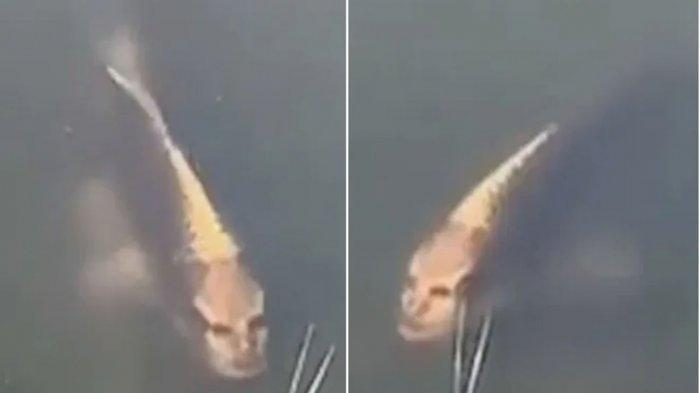 PENAMPAKAN Ikan Berwajah Mirip Manusia Bikin Geger, Perlihatkan Ekspresi Seperti Ini
