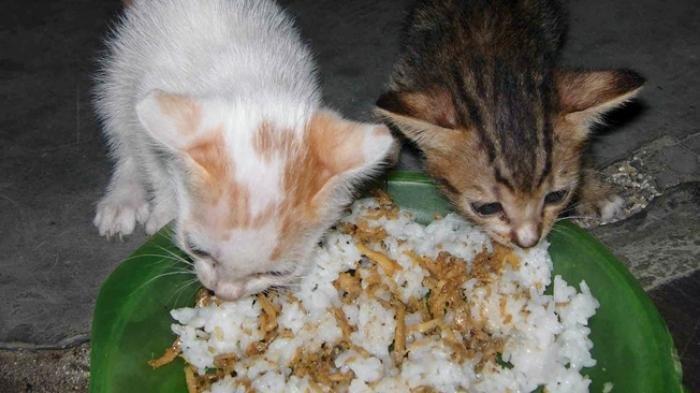Kucing Mendekati Saat Anda sedang Makan, Jangan Buru-buru Diusir apalagi Dikasari, Ini Penjelasannya