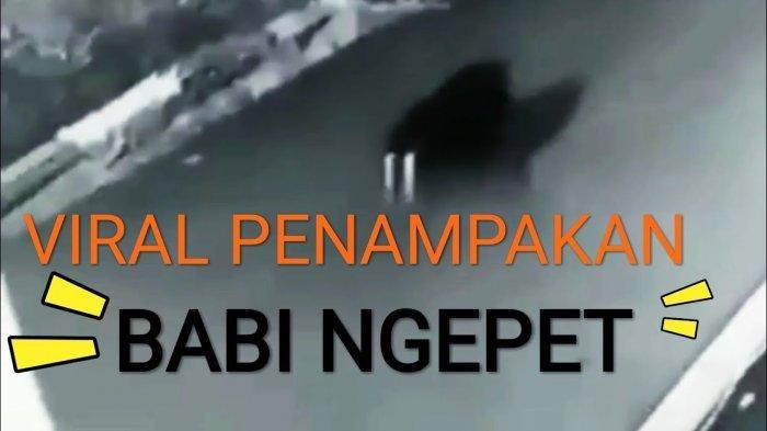 VIRAL Kabar Ada Babi Ngepet Tertangkap Warga di Depok, Disebut Wujudnya Berubah Saat Ditangkap